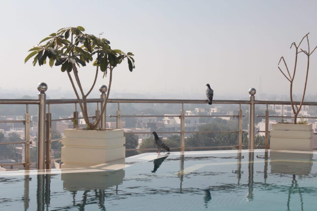 Infinity Pool at Narendra Bhawan, Best place to stay in Bikaner